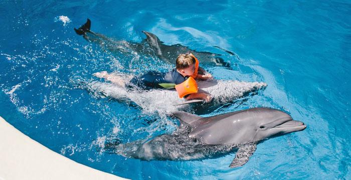 Дельфинотерапия при ЗПРР