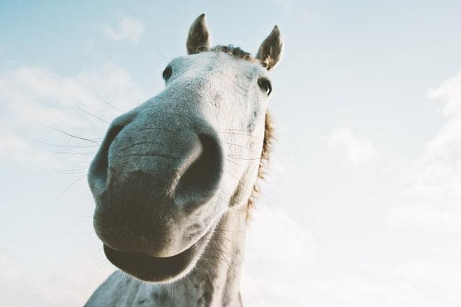 Упражнение Фырканье лошади