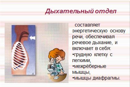 Дыхательный отдел речевого аппарата